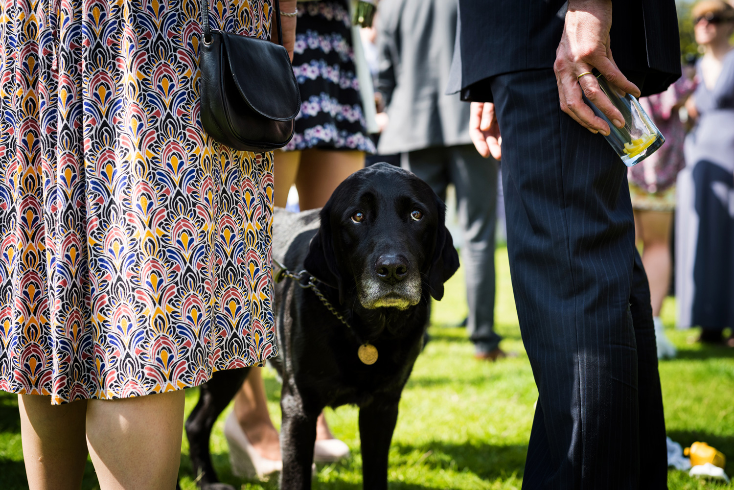 guide dog at wedding